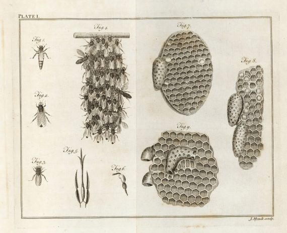 bees_and_comb_wildman_plate_1