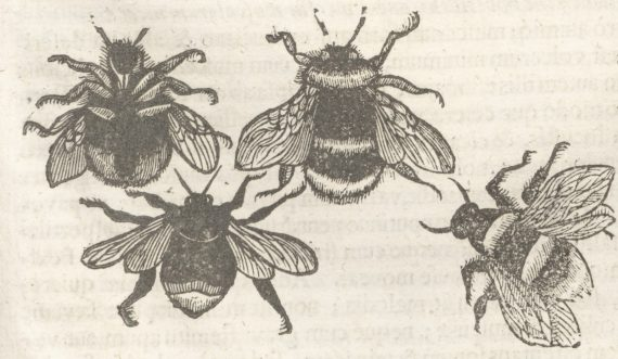 bees_from_theatrum_p-53