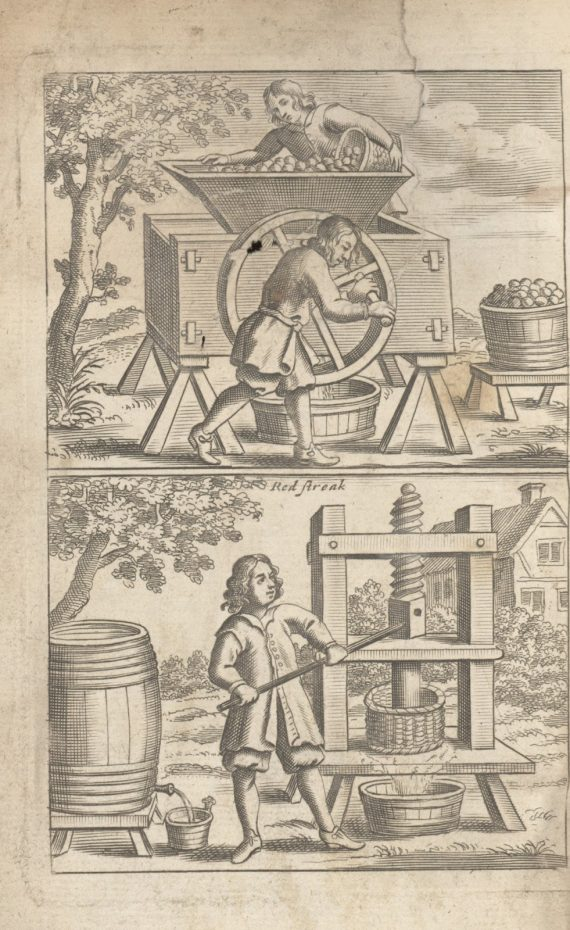 making_cider_from_vinetum_britannicum